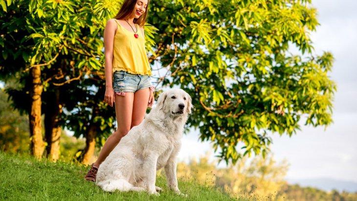 イタリアで人気のある犬種ランキングTOP3