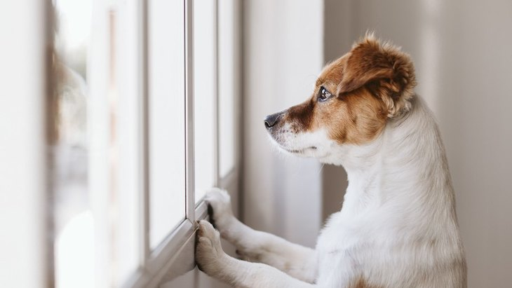 犬が窓の外に向かって吠える心理3つ!やるべき対策まで