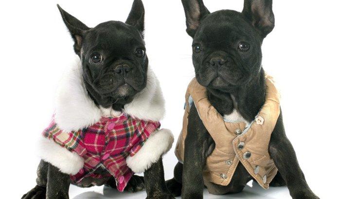 フレンチブルドッグ服の専門店5選!おしゃれでデザイン性の高いブランドまとめ