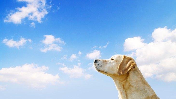 犬も紫外線の影響を受ける!知っておきたい5つのこと
