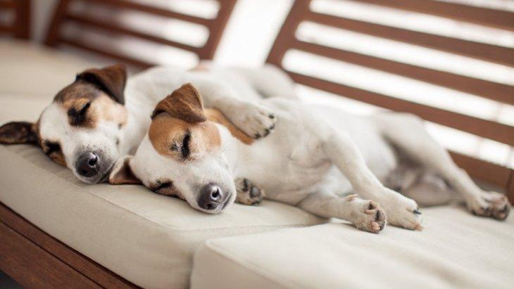 犬の『寝相』でわかる性格5選!あなたの愛犬はどのタイプ?♡
