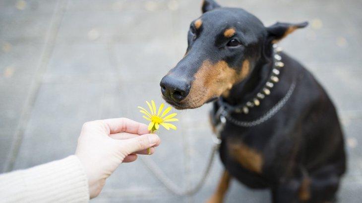 犬は匂いを好き嫌いする?好む匂いと苦手な臭いについて