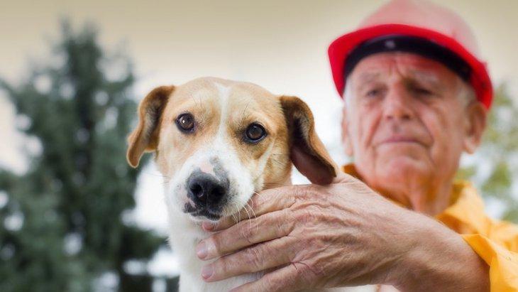 大型地震が来たら、犬はどうする?飼い主が必ず準備しておくべきことやモノ8選