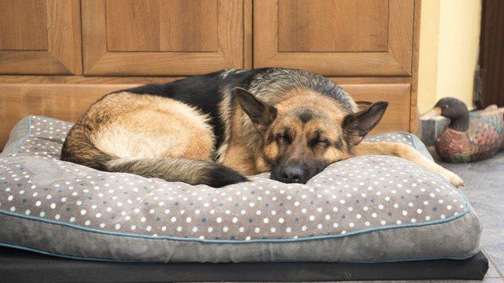 犬が快適に眠れない『NGな寝床』4選!ベストな環境を作るコツや注意点を解説