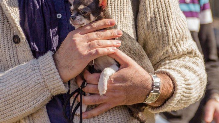 犬を人混みに連れて行く際の6つの注意点やマナー