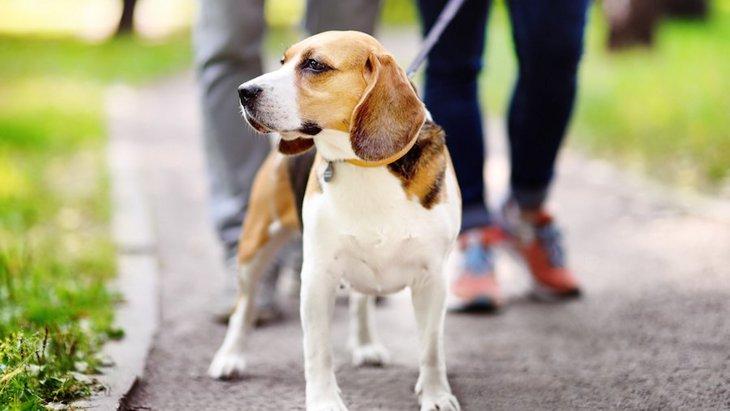 犬のオシッコは思っているよりも環境に悪影響かもしれない【研究結果】