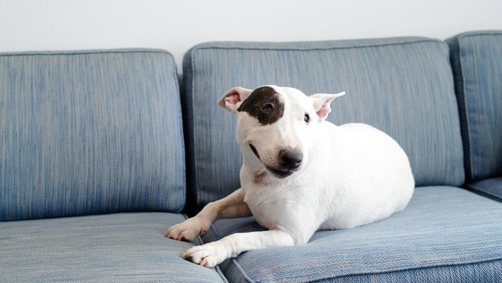 犬の『ウンチ』が散乱しないようにする対策3選