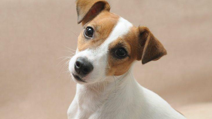 犬が理解しやすい『人気の名前』6つ