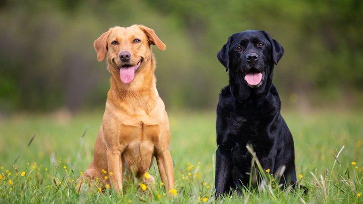 人とコミュニケーションをとるのが上手な犬の特徴6選