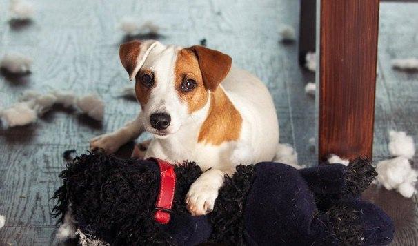 飼い主がストレスを感じていると、犬もストレスを感じるって本当?