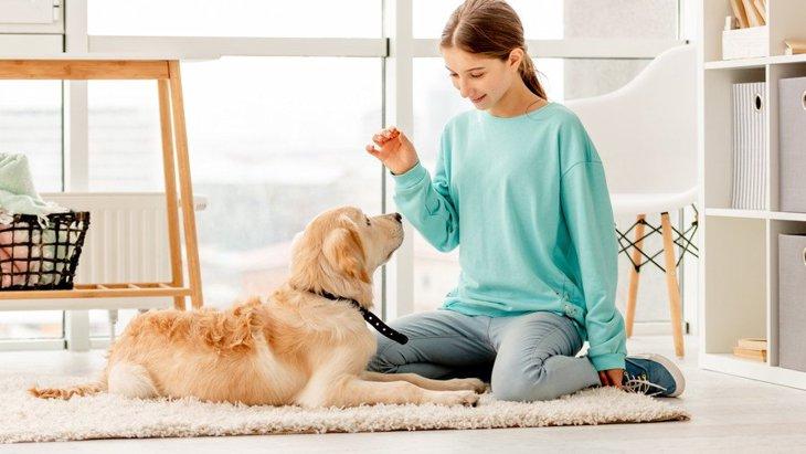 犬にしつけで『完璧』を求めすぎていませんか?