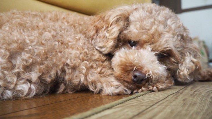 愛犬の食いつきが悪い理由とは?家庭でできる3つの対策