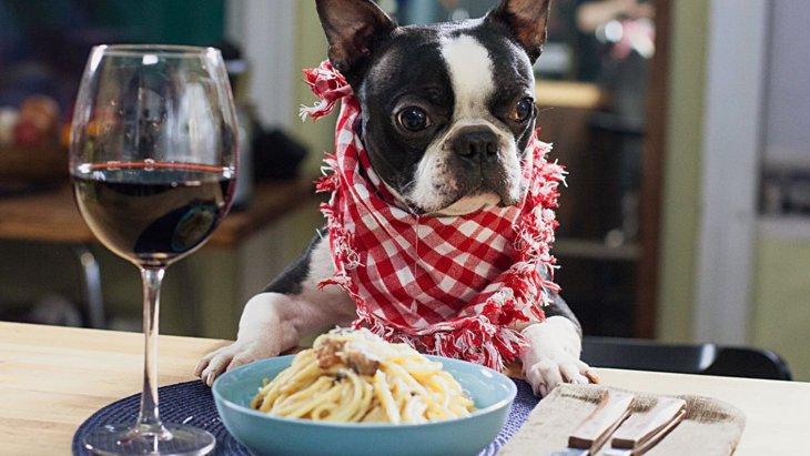 愛犬の負担になってませんか?犬にとって必要のない『贅沢』3選