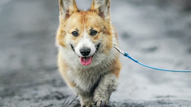 雨の日に犬の散歩をする時、絶対にやってはいけないNG行為3選