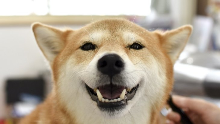 犬が『うっとり顔』をしている時の心理5つ