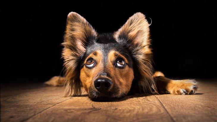 聴覚障害を持つ犬との接し方と注意点
