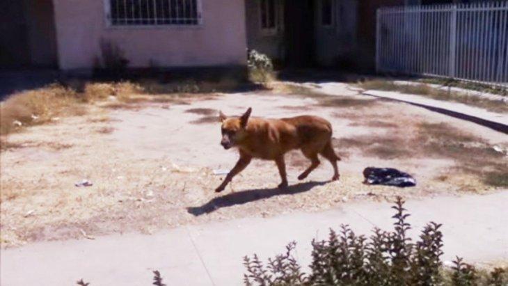 引っ越した飼い主に置き去りにされた犬の保護。賢い犬と人の知恵比べ!