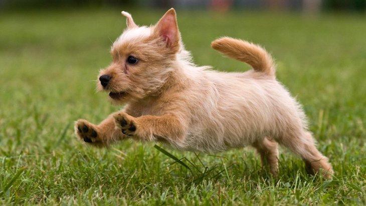 犬が突然走って伏せるときの心理3つ