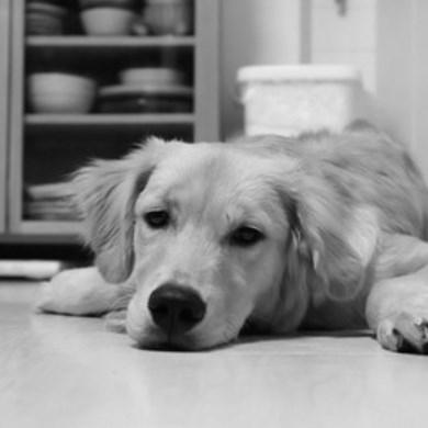 中国でお犬様バブル崩壊!?ブームの犠牲になったワンコ達