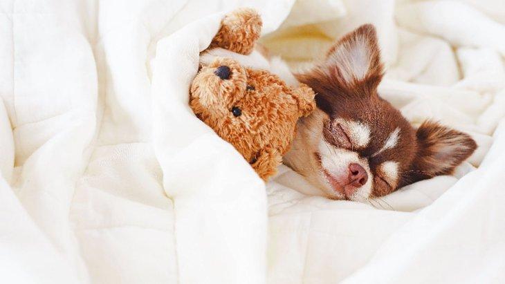 犬が爆睡している時に見せる仕草や表情4選