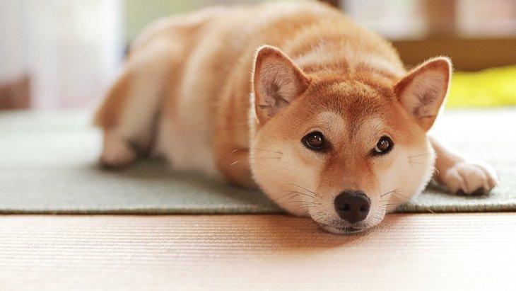犬が見せる『ツンデレ行動』4選
