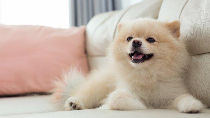 犬の肌を乾燥から守る保湿方法4つ