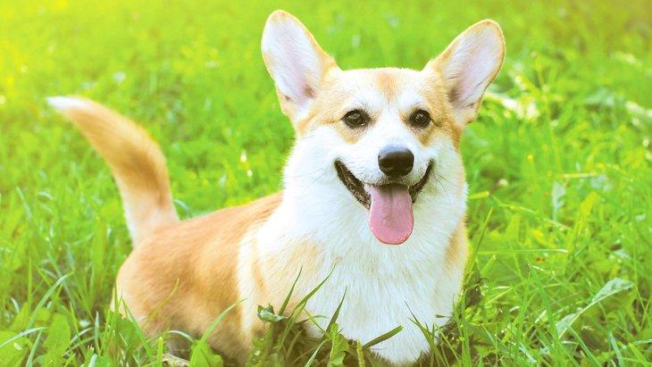犬が喜びを感じているときのサイン6つ!これに気づけたらもっと仲良くなれるかも♡