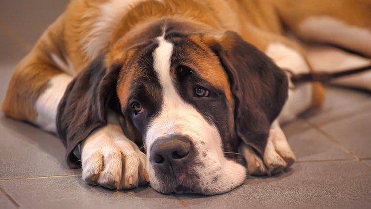 近年増えている『犬の精神疾患』とは?