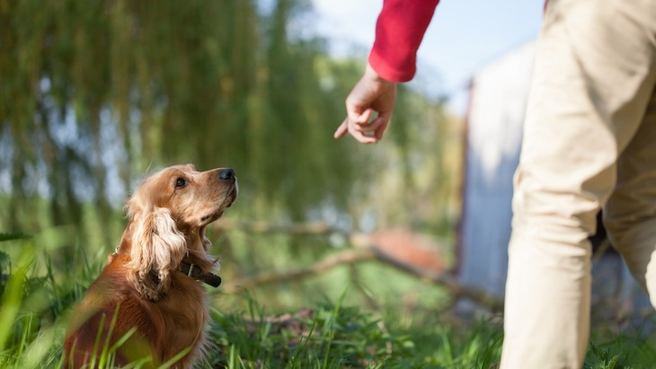 どうしたらやめられる?犬のお散歩中の「拾い食い行動」