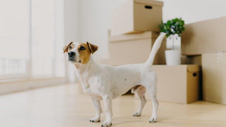 犬が辛いと感じている『住居環境』3選!明るすぎる部屋やうるさすぎる環境はNG!