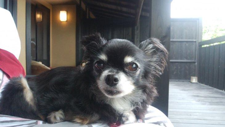 愛犬と行く客室露天風呂付き宿の旅。「はんなり伊豆高原」① 客室編