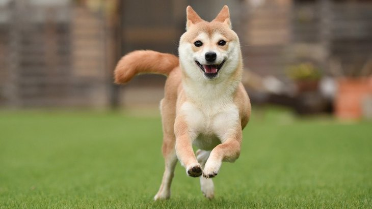 犬が突然ハイテンションになる心理4選!危険に晒さないために意識すべきポイントまで解説