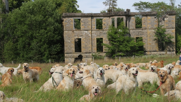 ゴールデンレトリバーがいっぱい!スコットランドの犬祭りが天国