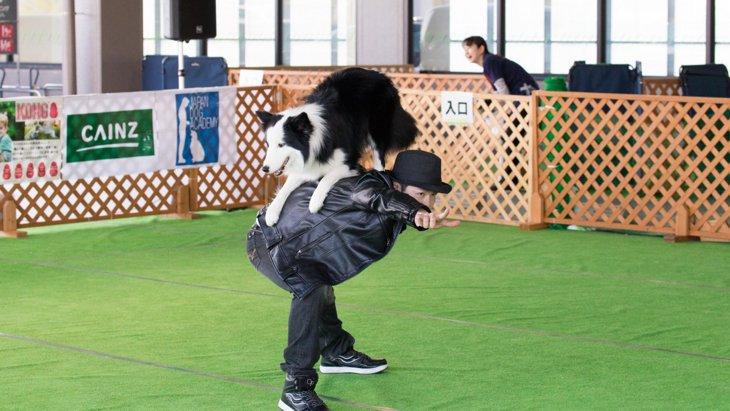 人も犬も音楽に合わせてダンス!?ドッグダンス競技会開催!