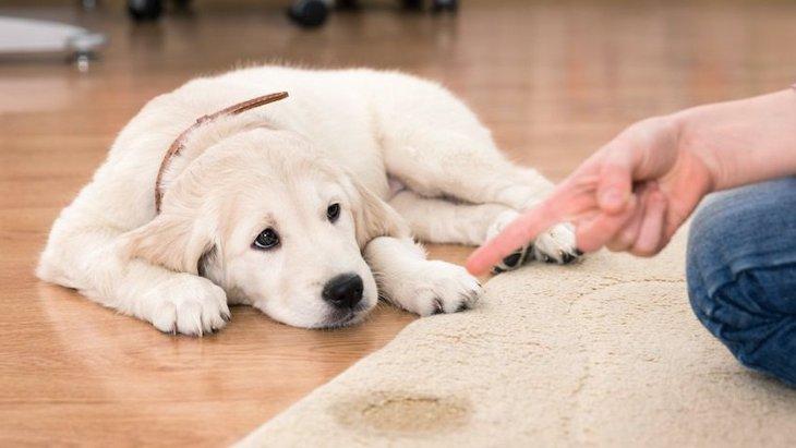 犬がトイレを失敗してしまう理由5選!改善するための対策まで解説