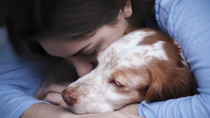 犬が「寂しかった」を伝えている5つのサイン