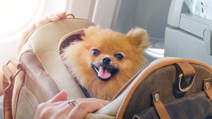 犬にNGな『キャリーバッグ』の特徴3選!どんなものを選べばいいの?