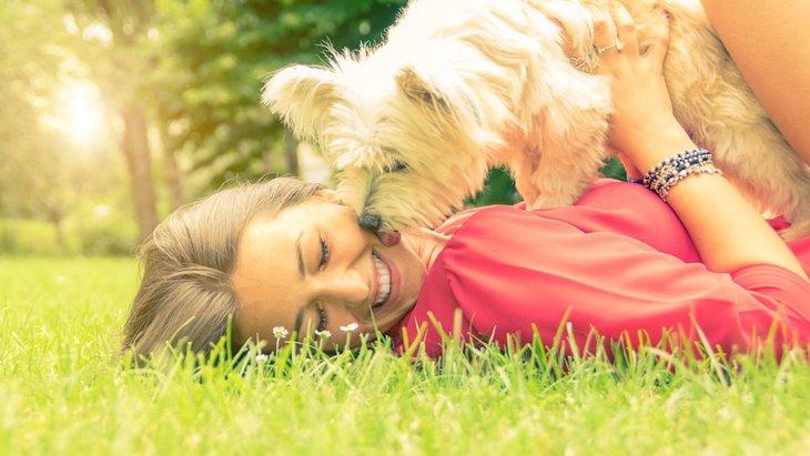 犬が飼い主の上に乗っかってくる時の心理3選
