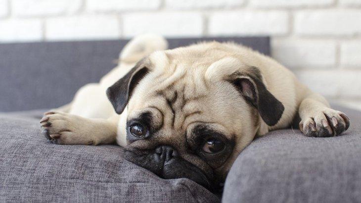 おっとりした性格の犬に共通する特徴3つ