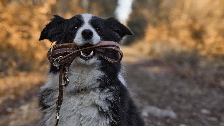 野鳥にとってオフリードの犬は人間よりも怖い存在【研究結果】