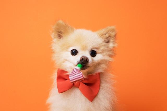 研究からわかった、犬が人間を観察する目の確かさ