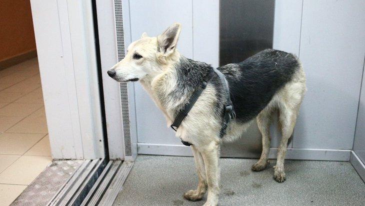 エレベーター内で多発する犬の事故。3つのケースと対策法