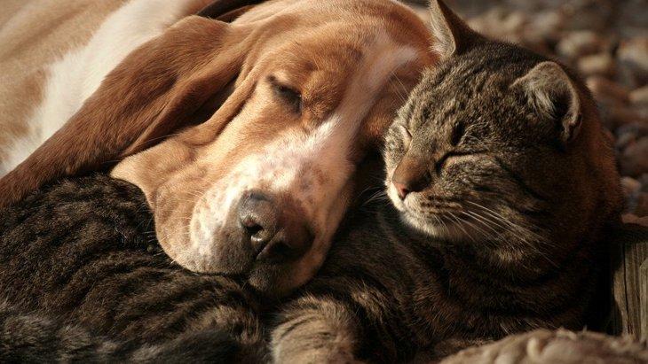 犬と他の動物との共同生活について