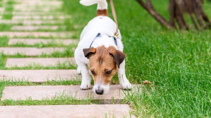 犬が散歩中に誤飲してしまう『超危険なもの』7選!最悪の場合は死に至る…?