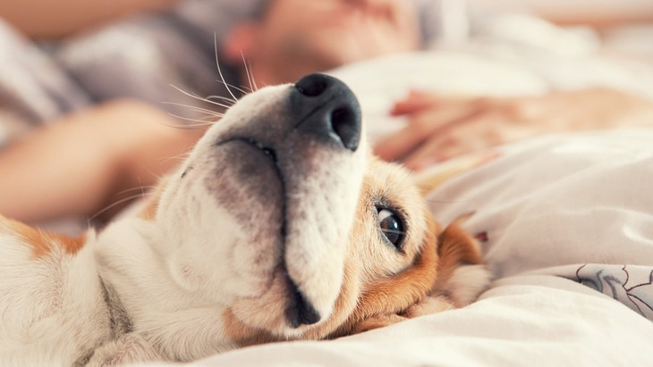 犬と同じ布団で寝るときに気を付けたい5つのこと