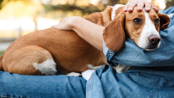 犬が飼い主を急に避けるようになる心理4選