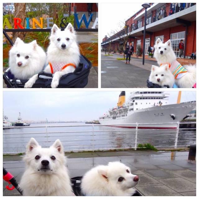 犬と一緒に楽しむ、横浜赤レンガ倉庫とマリン&ウォークヨコハマ