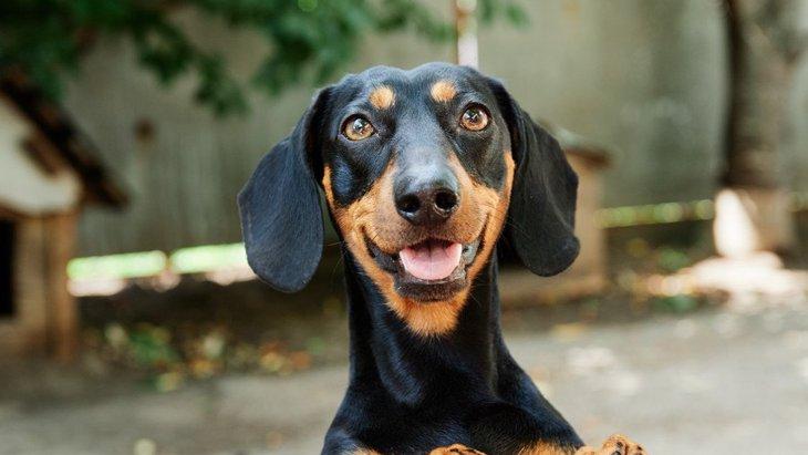 犬が必ず喜ぶ『飼い主の言葉』6選!普段から意識して喋りかけてみて♡