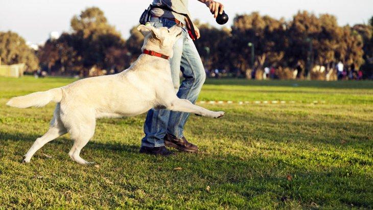 犬が飼い主に体当たりしてくる3つの理由