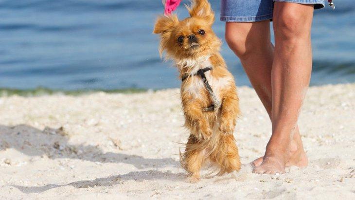 犬が後ろ足で立っている時の4つの心理